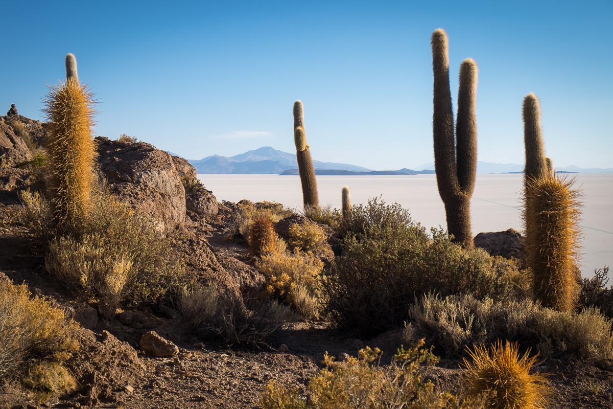 altiplano-4100